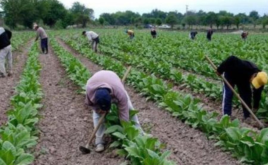 Gobierno Nacional envió más de $40 millones a tabacaleros de Corrientes